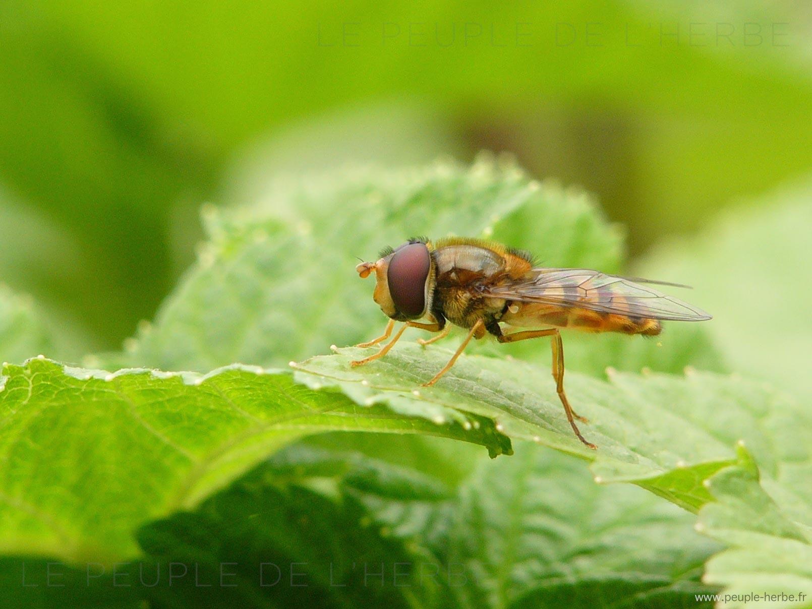 Les mouches à se débarrasser : en combien d'étapes ?